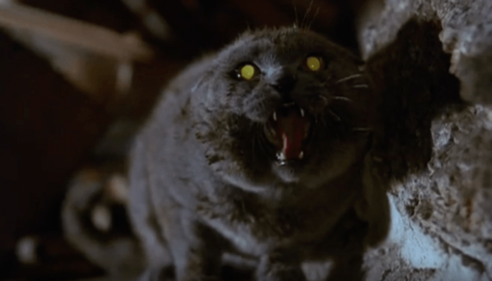 Get a sneak peak of Stephen King's 'Pet Sematary' remake