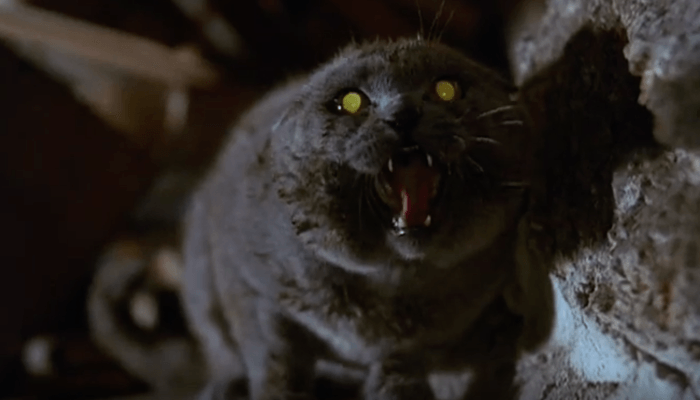 The First Images From the New PET SEMATARY Have Arrived