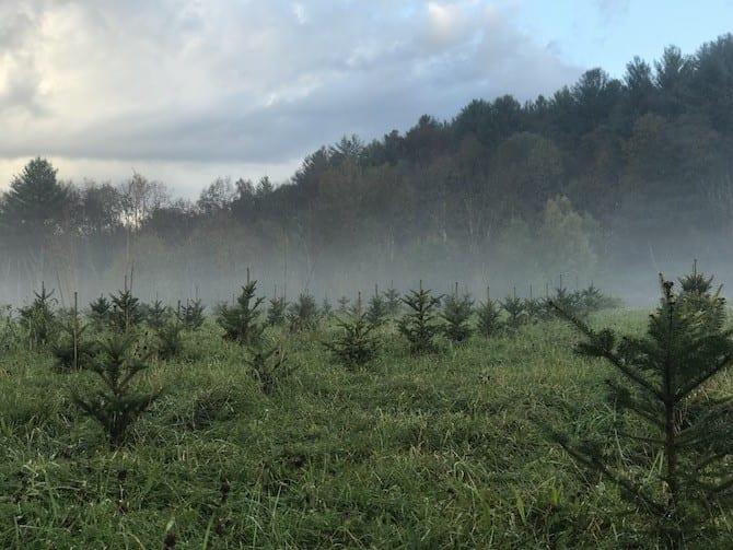 alan day christmas tree farm
