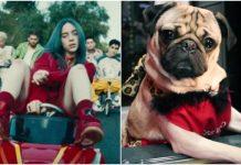 Doug The Pug, Billie Eilish