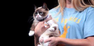 grumpy cat vidcon 2014