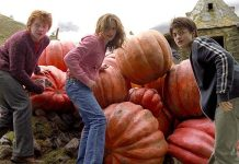 harry potter pumpkins fall