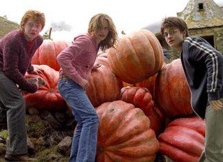 harry potter pumpkins fall
