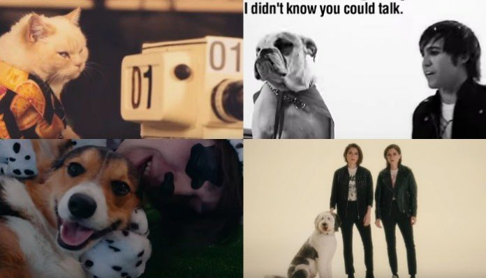 pets in music videos