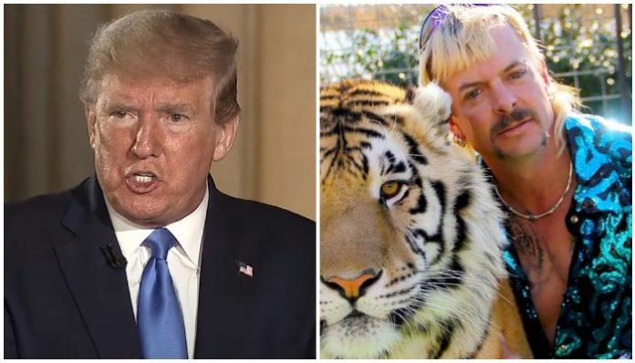 donald trump tiger king joe exotic