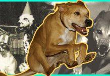 Dog Album Artwork National Dog Week 2020